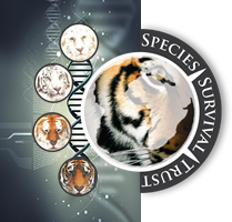 Species Survival Trust Logo